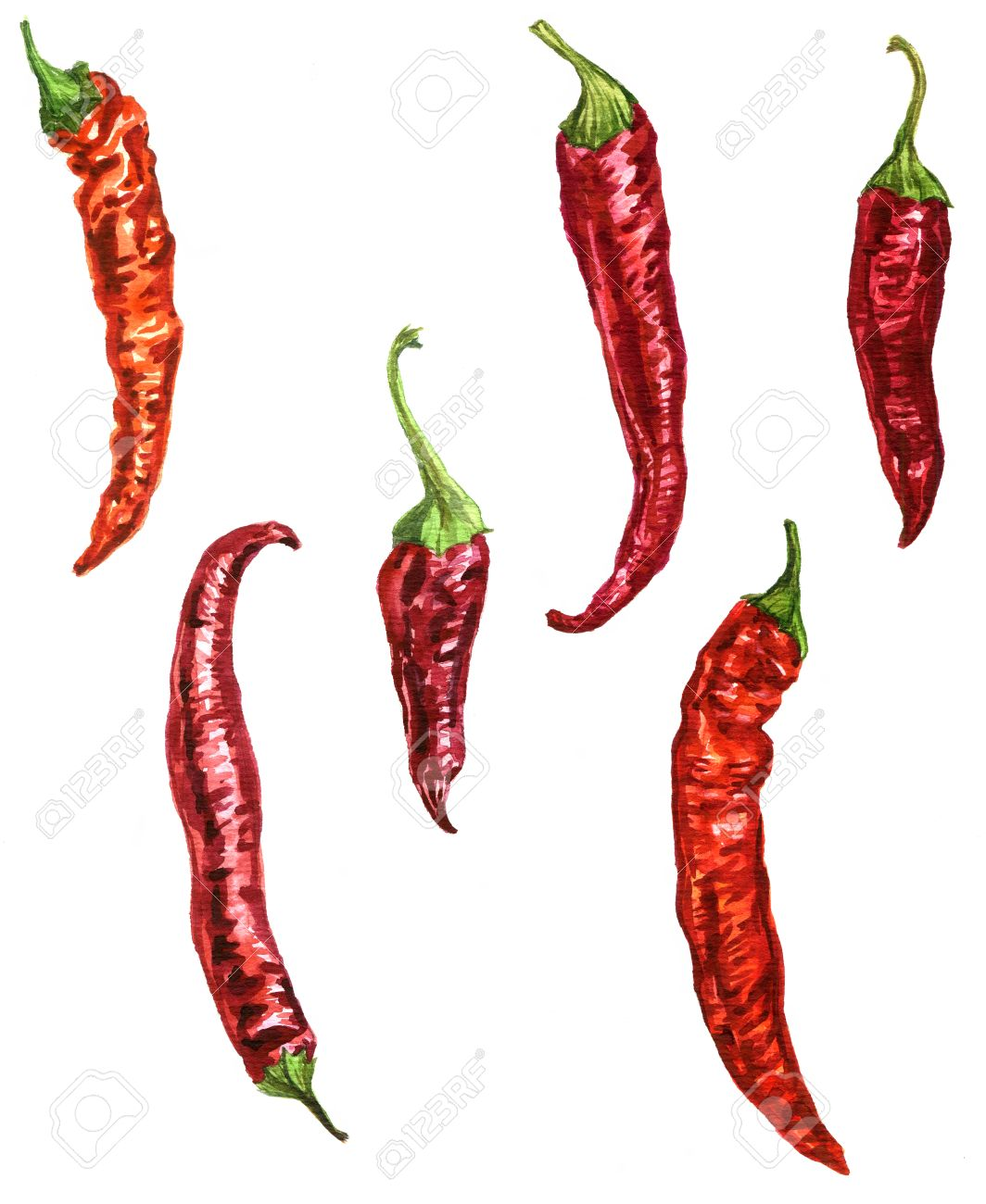 1064x1300 Red Chili Pepper Drawing By Watercolor At White Background