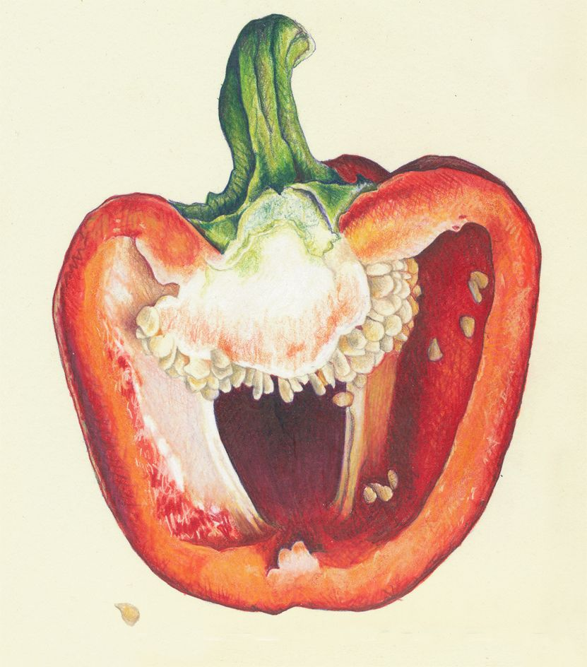 831x944 Colored Pencil Drawings