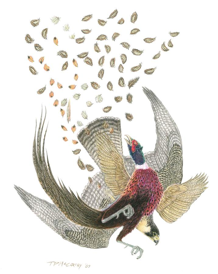716x900 Peregrine Falcon And Ringneck Pheasant Drawing By Tim Mccarthy