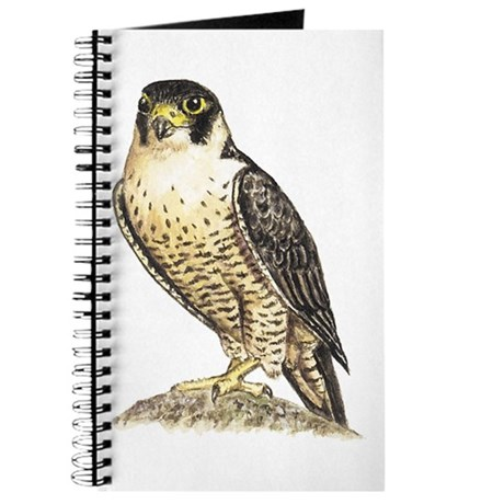 460x460 Peregrine Falcon Drawing Notebooks Peregrine Falcon Drawing