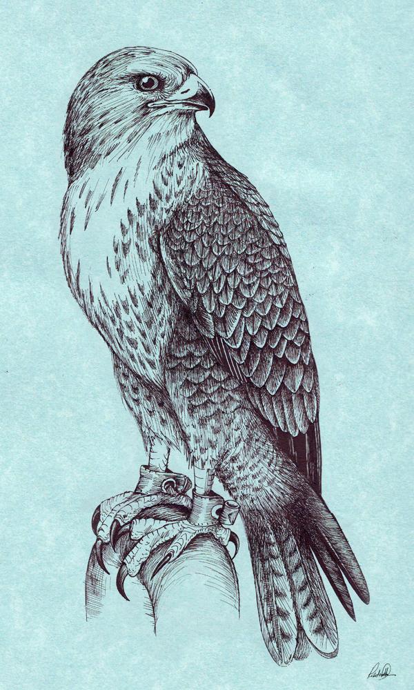 600x1000 Peregrine Falcon By Grwobert