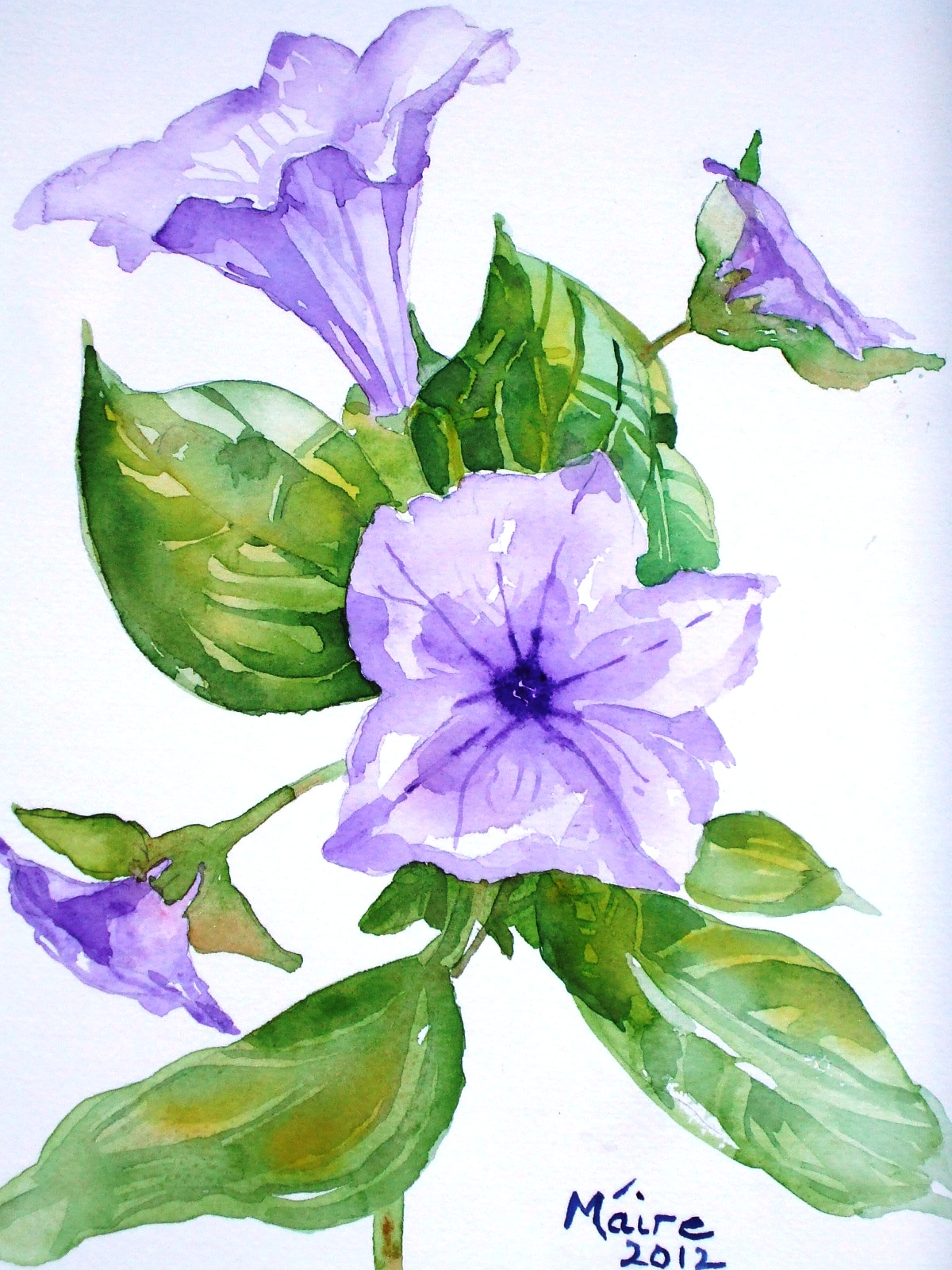 Petunia Drawing at GetDrawings.com | Free for personal use ...