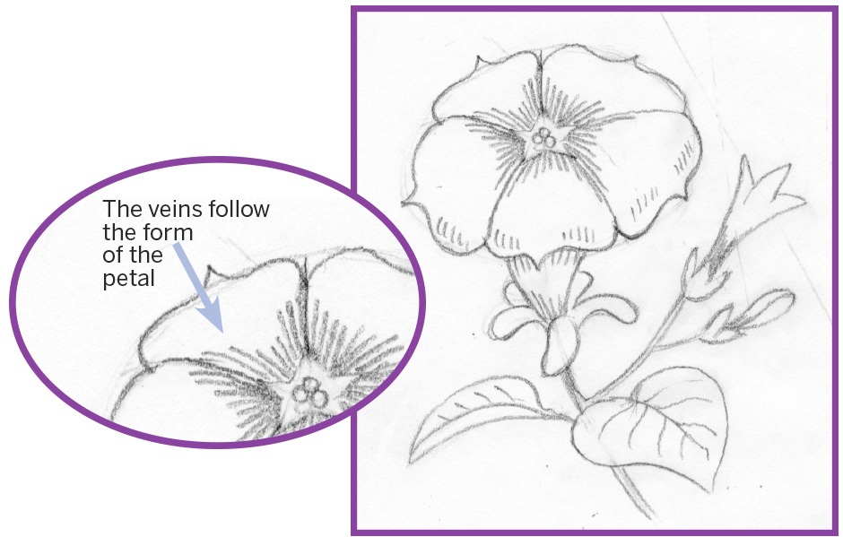 Petunia flower drawing at getdrawings free for personal use 940x599 art thief draw a petunia ccuart Choice Image