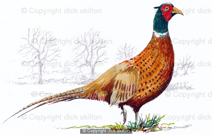 700x447 Pheasant Coloured Pack Of Six Bespoke Greeting Cards