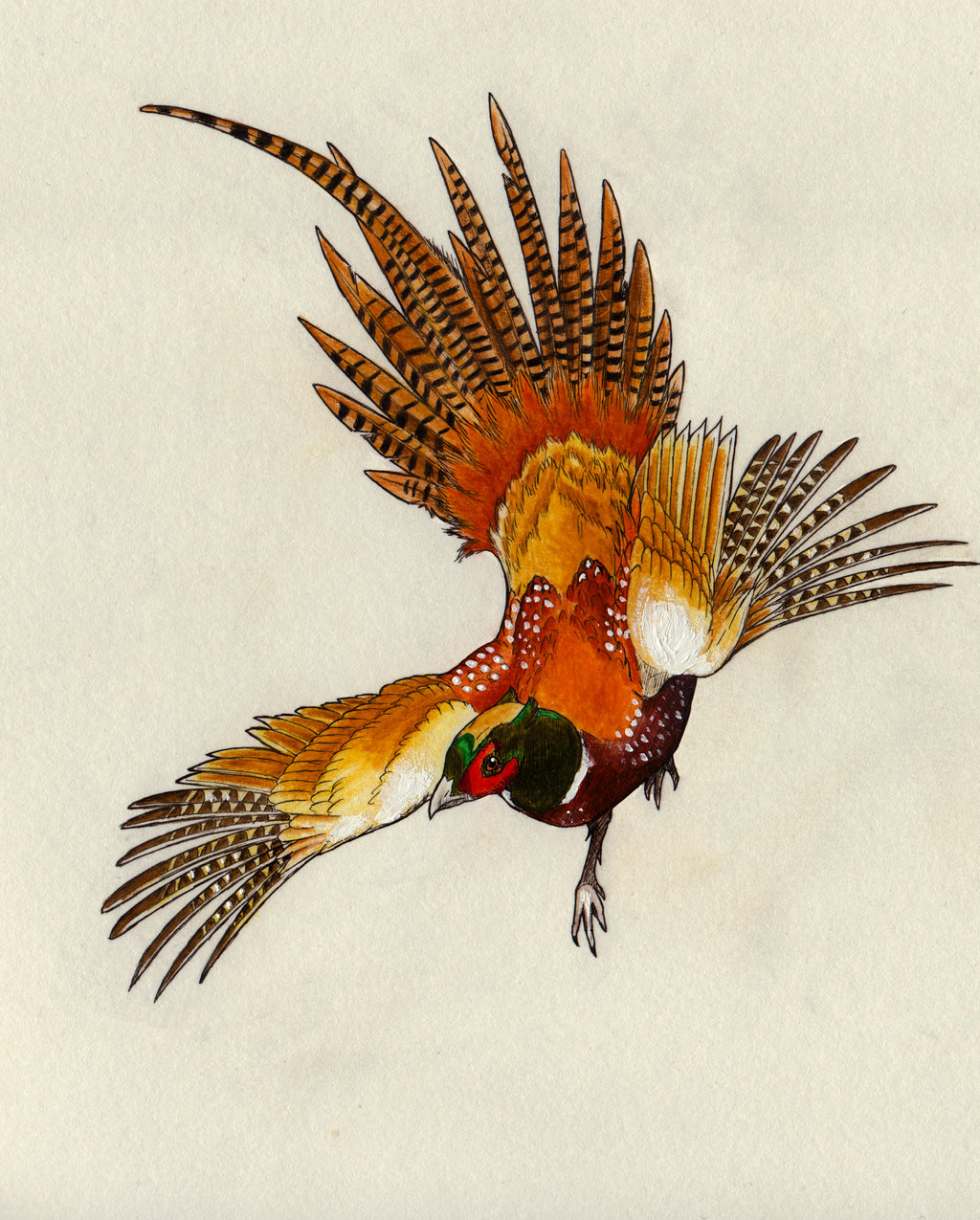 1024x1275 Of The Pheasant By Eurwentala