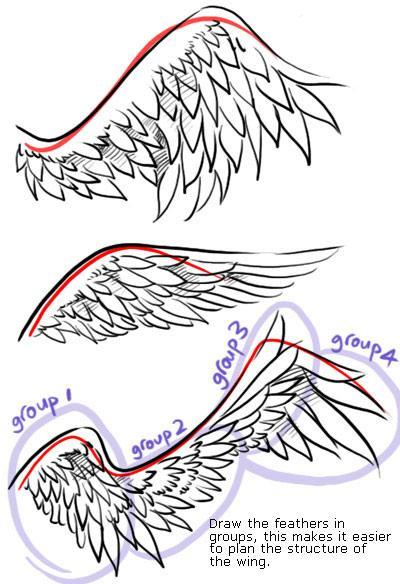 Phoenix Wings Drawing At Getdrawingscom Free For Personal Use
