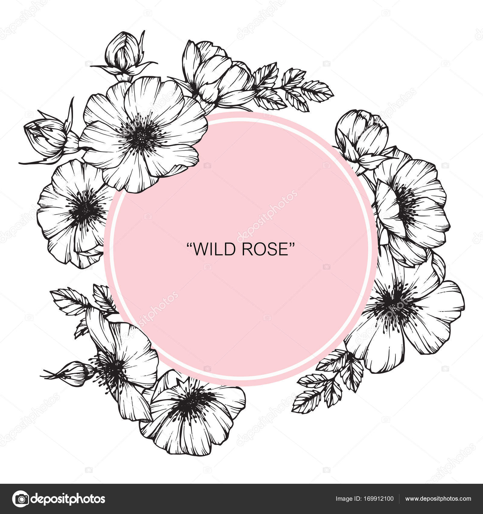 1600x1700 Wild Rose Flower Frame. Drawing And Sketch With Black And White
