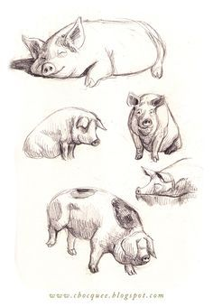 236x340 Image Result For Drawings Of Pigs Art Drawings