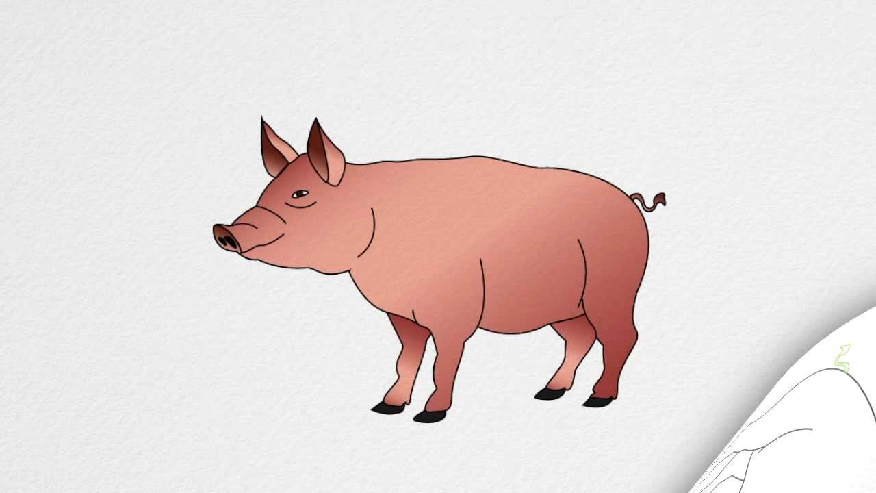 1280x720 How To Draw A Pig Step By Step