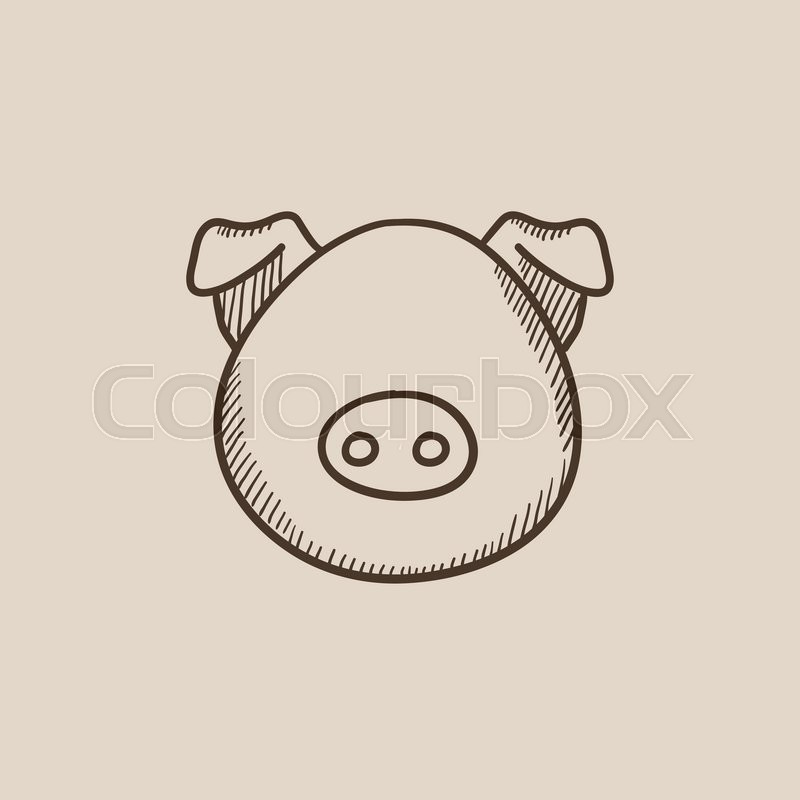 800x800 Pig Head Sketch Icon For Web, Mobile And Infographics. Hand Drawn