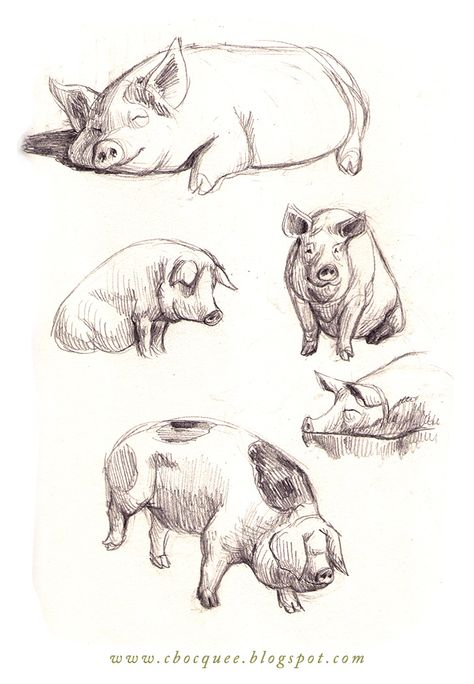 474x684 Pencil Drawing Of Pig