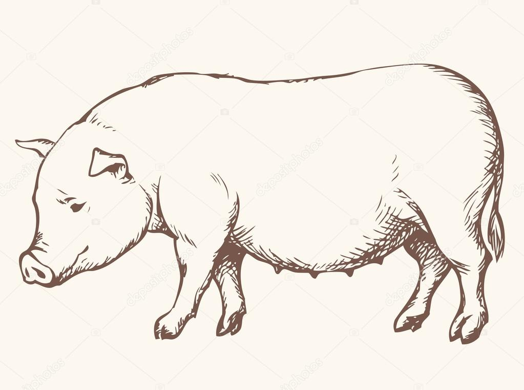 It is an image of Impeccable Drawing A Pig Icebreaker