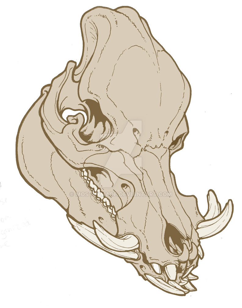 Pig Skull Drawing at GetDrawings.com | Free for personal use Pig ...