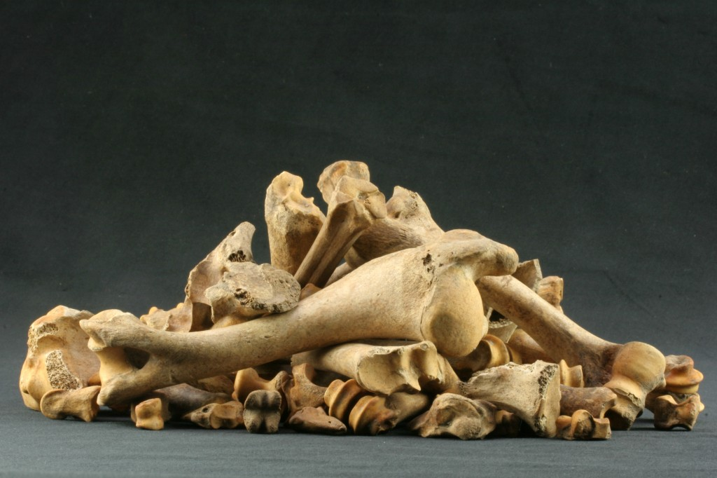 1024x682 Not Just A Pile Of Bones Real Archaeology