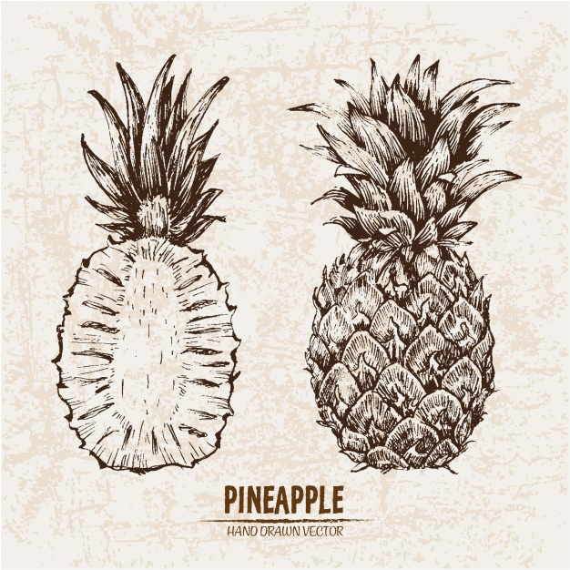 626x626 Hand Drawn Pineapple Collection Vector Free Download