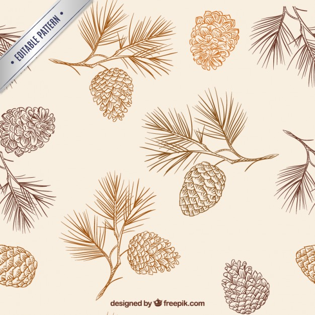 626x626 Hand Drawn Pine Cones Pattern Vector Free Download