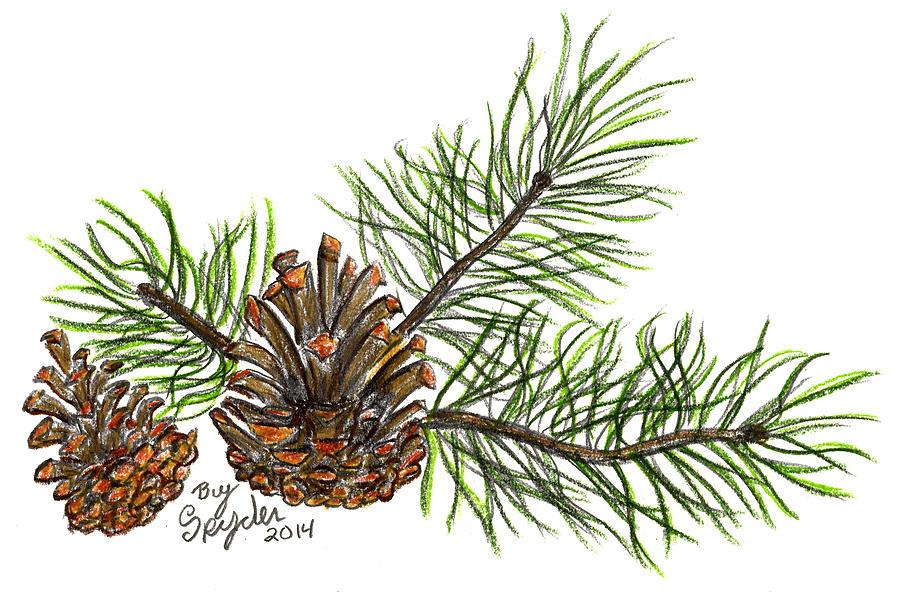 900x592 Pine Branch Drawing By Robbin Webb