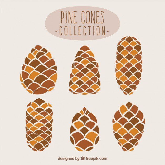 626x626 Pine Cone Vectors, Photos And Psd Files Free Download