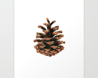 340x270 Pine Cone Drawing Etsy