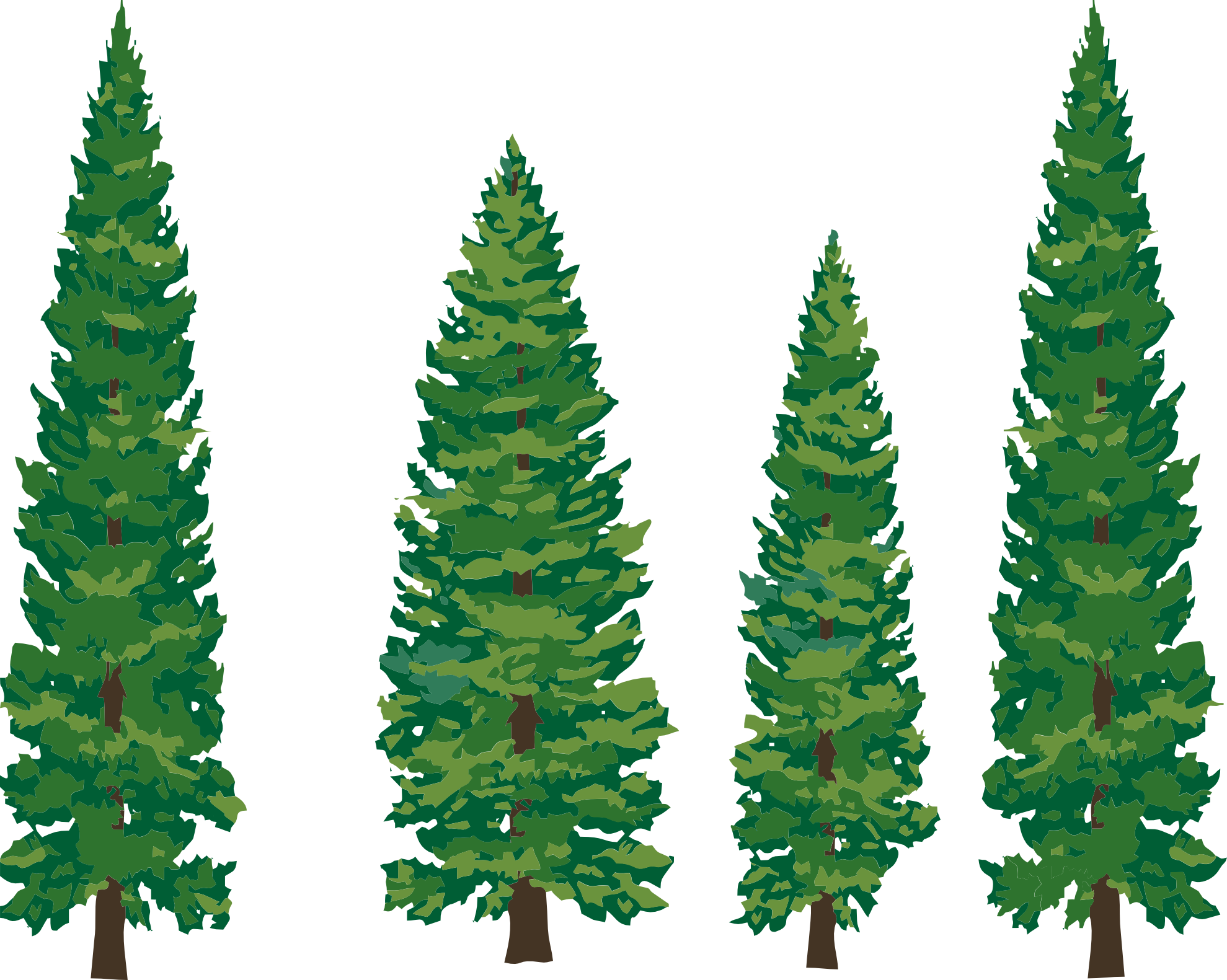 1979x1581 Drawing Pine Tree Clipart