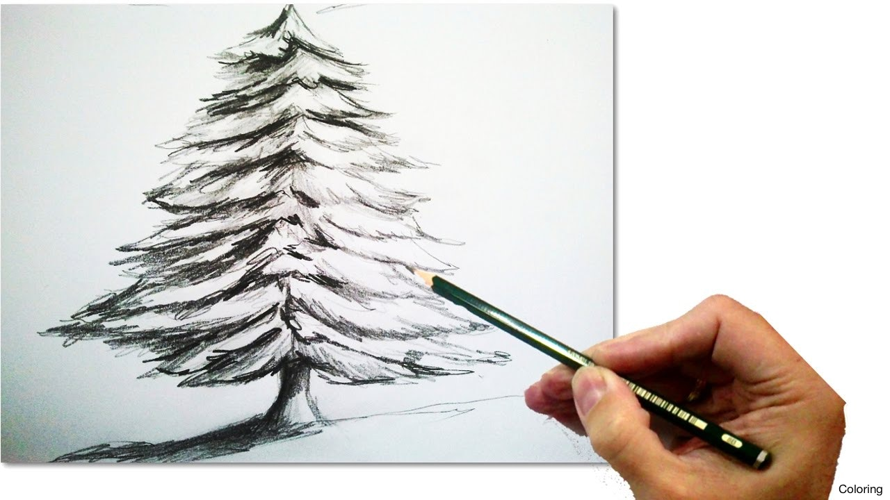 How to draw pines in pencil and paints A step-by-step guide for adults and children 64