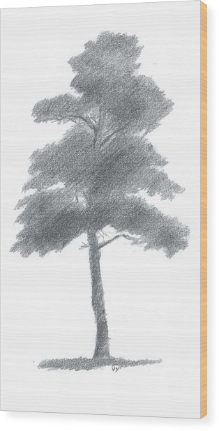 314x618 Pine Tree Drawing Number One Painting By Alan Daysh