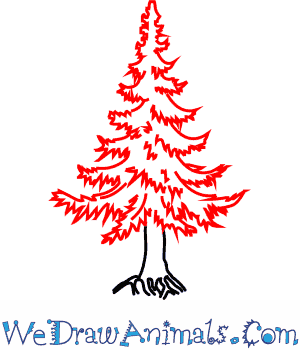 300x350 How To Draw A Fir Tree