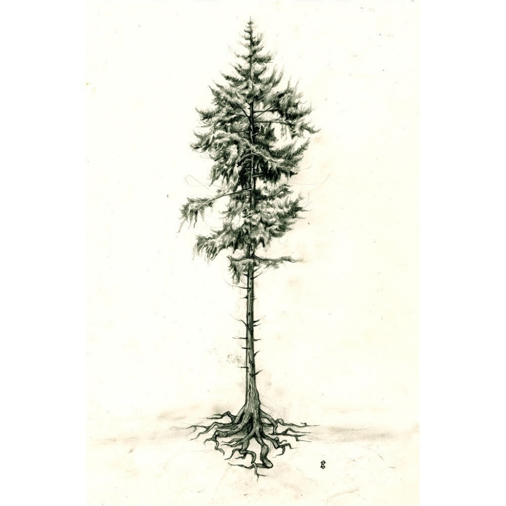 1024x1024 Pine Tree Drawing Top Landscape Pine Tree Sketch Images