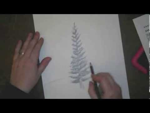 480x360 How To Draw Pine Trees