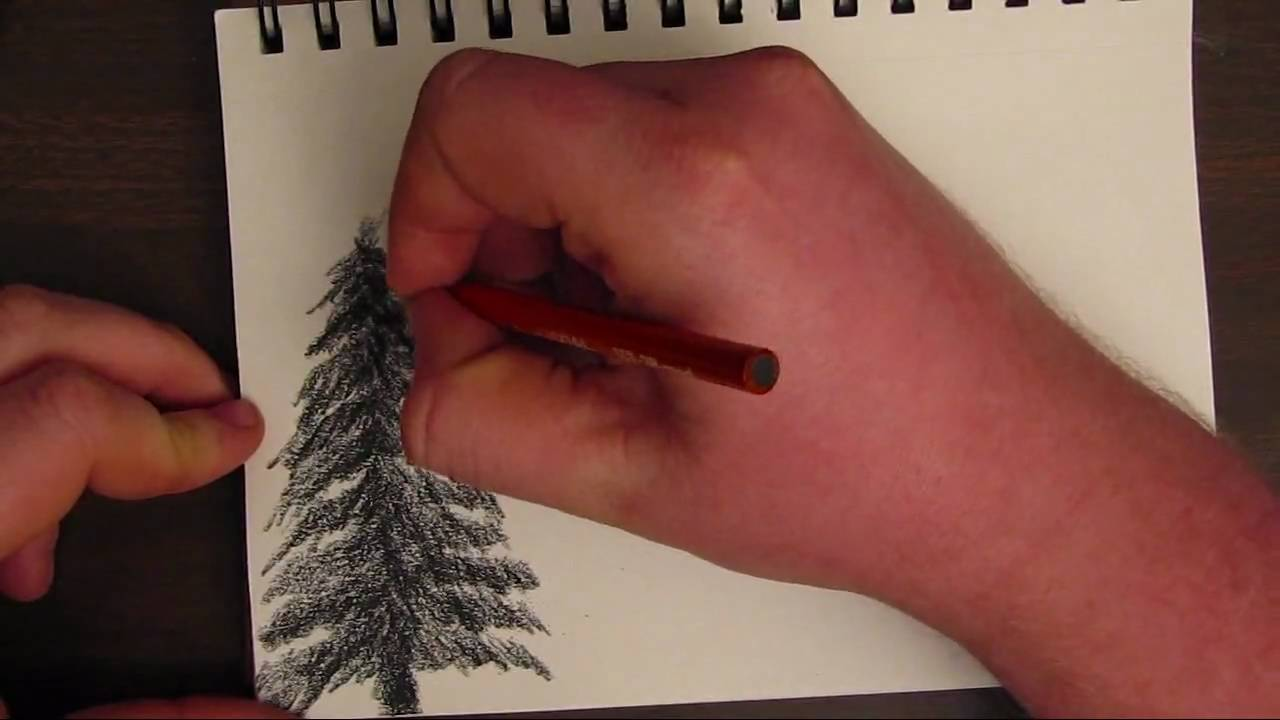 How to draw pines in pencil and paints A step-by-step guide for adults and children 62