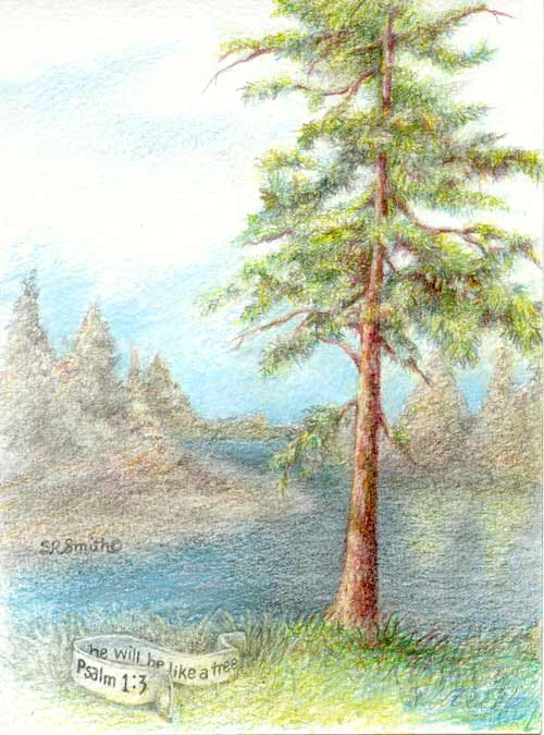 500x675 Pencil Drawings Trees Like A Tree Colored Pencil Illustration