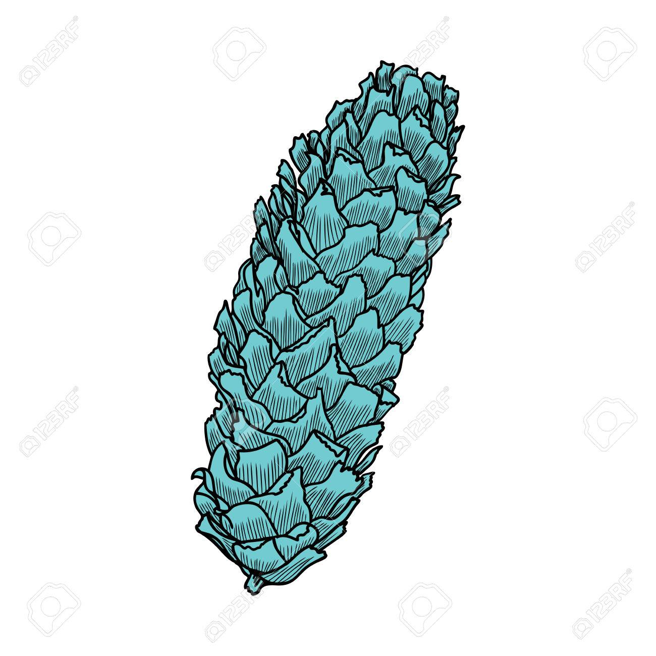 1300x1300 Hand Drawing Pine Cone. Pinecone Drawing. Decoration For Greeting