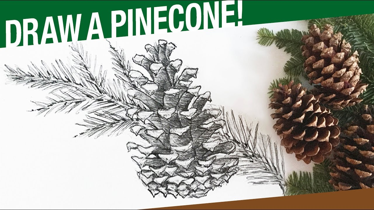 1280x720 How To Draw A Pinecone Amp Pine Tree Branch (Winter)