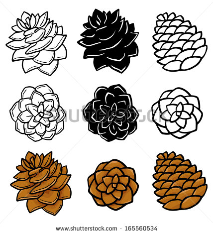 428x470 Image Result For Pinecone Pinecones Miscl Pine