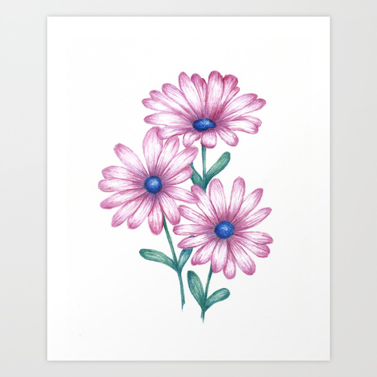 550x550 Flower Drawing Daisy Pink Print, Botanical Art Art Print By
