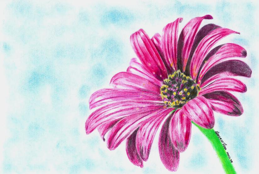 824x554 Pink Daisy By Flotter