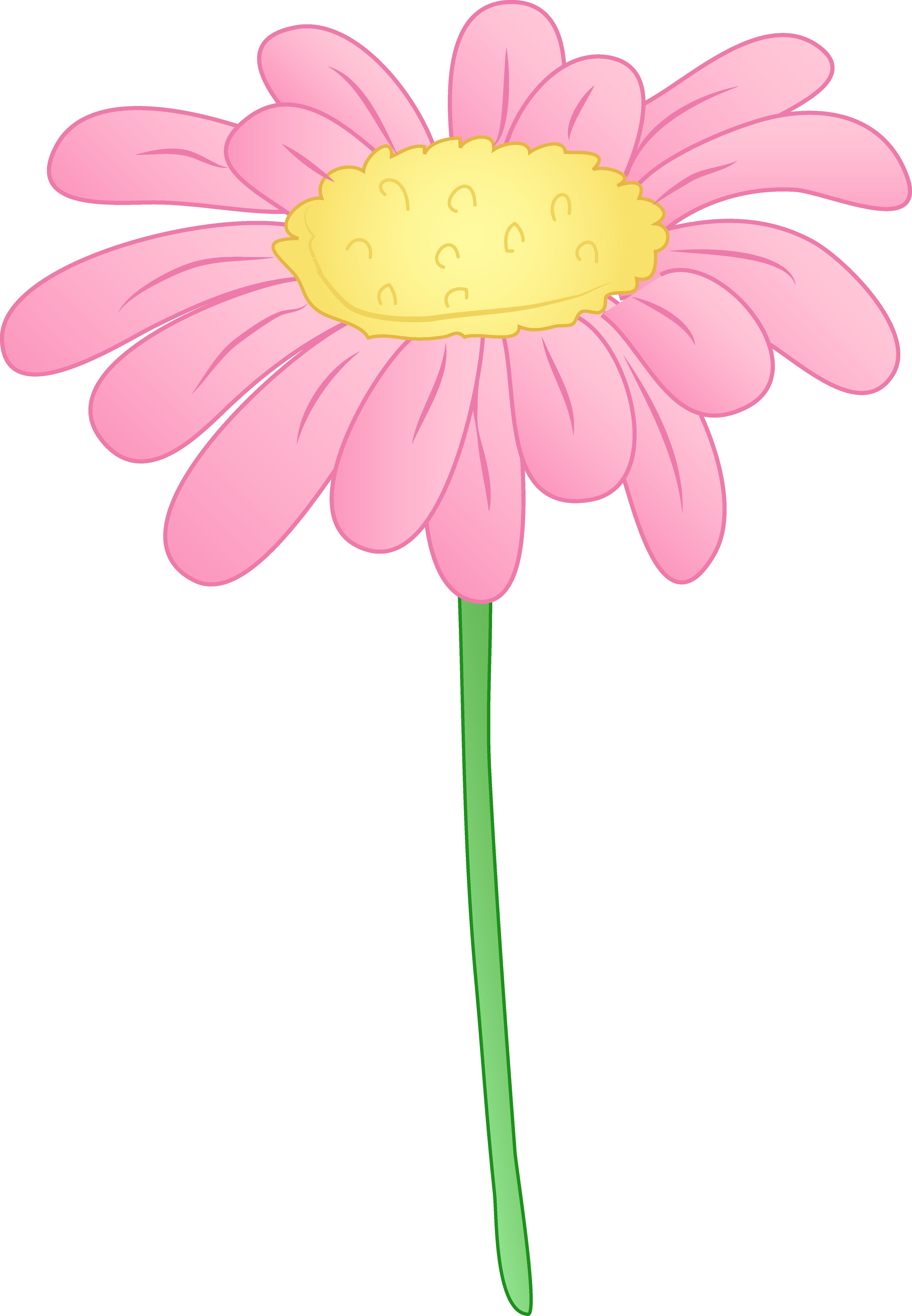 4682x6755 Pretty Pink Daisy Flower