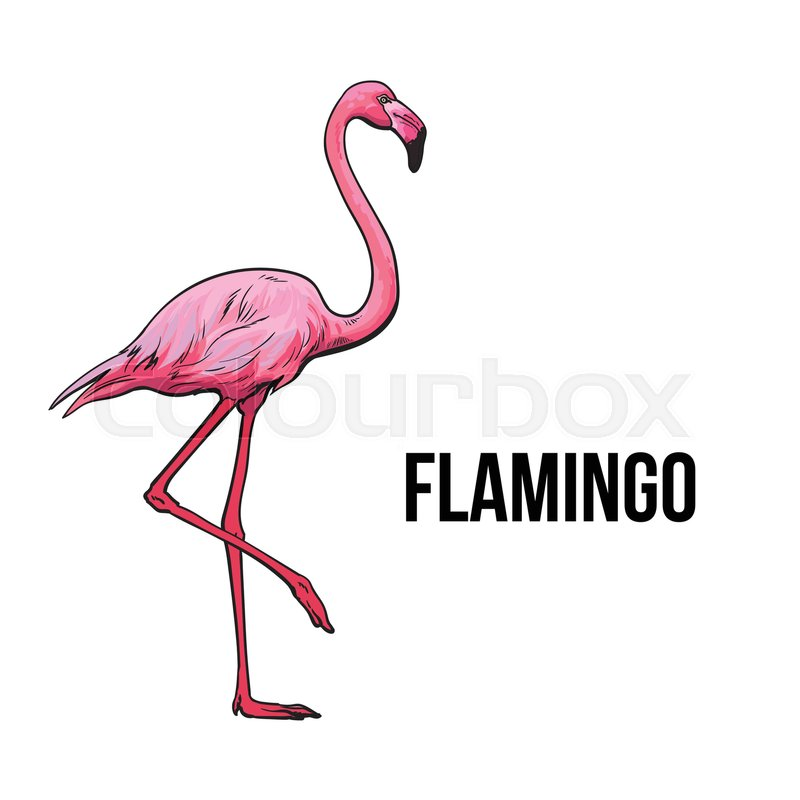 800x800 Hand Drawn Pink Flamingo, Colorful Sketch Style Vector