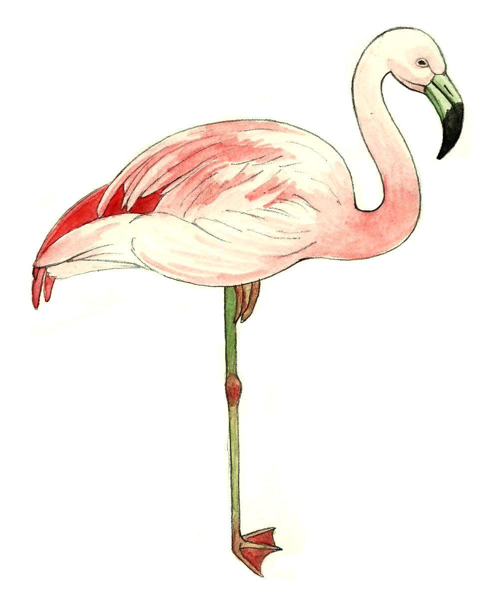 1001x1202 How To Draw A Pink Flamingo