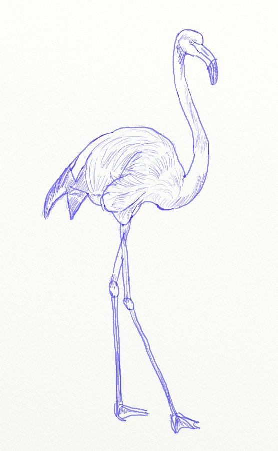 555x900 How To Draw A Pink Flamingo