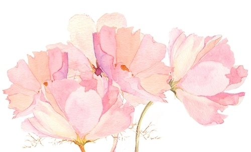 500x304 Pink Flower Drawing Coloring Page Breathtaking Pink Flower Drawing