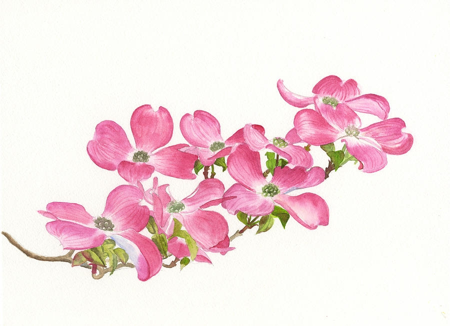 900x652 Pink Flower Drawing Coloring Page Mesmerizing Pink Flower Drawing