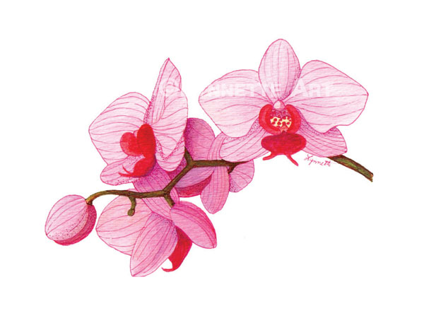 600x464 Pink Flowers Drawing 5 High Resolution Wallpaper