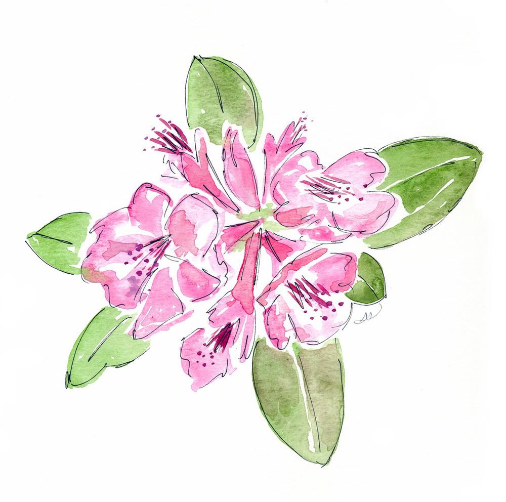 1000x992 Pretty Pink Flowers Drawing Sarah