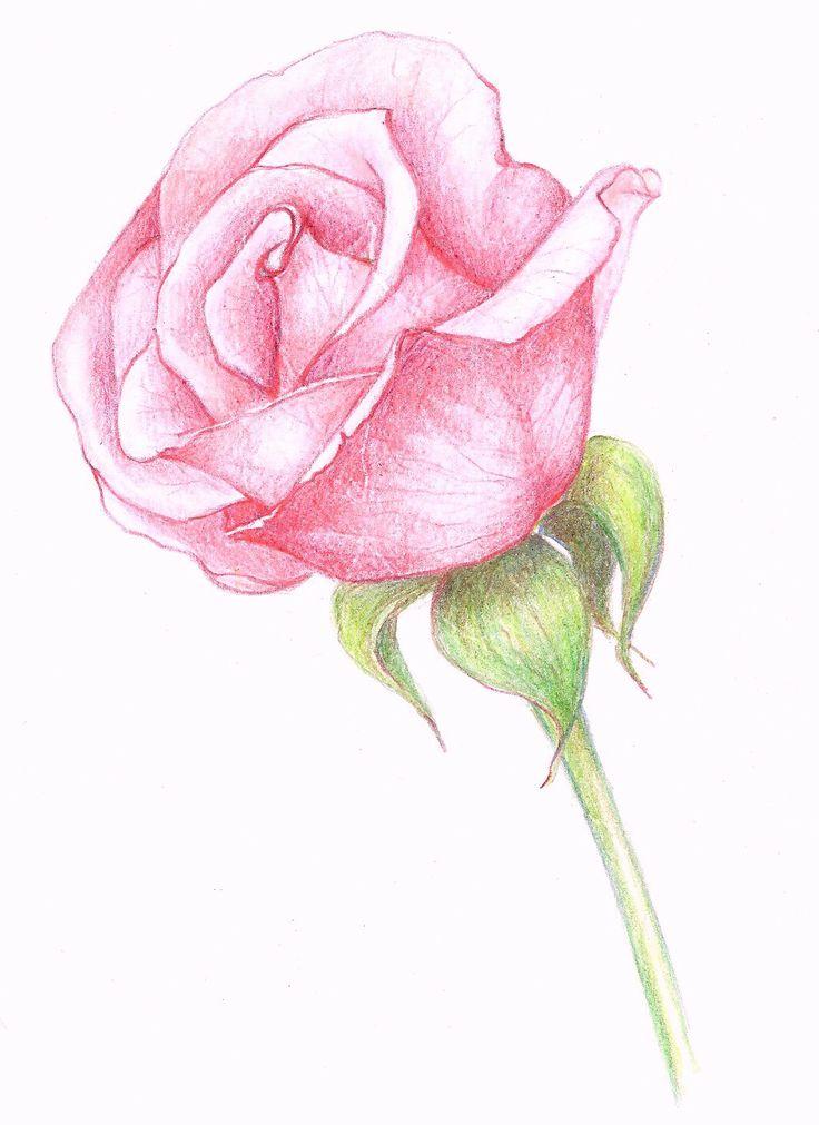 736x1011 Resultado De Imagem Para Flower Drawing In Pencil Desenharth