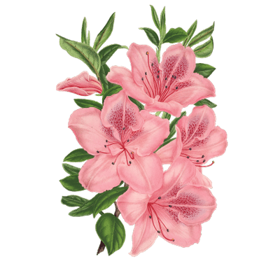 400x400 Pink Bunch Of Flowers Drawing Flowers Flowers
