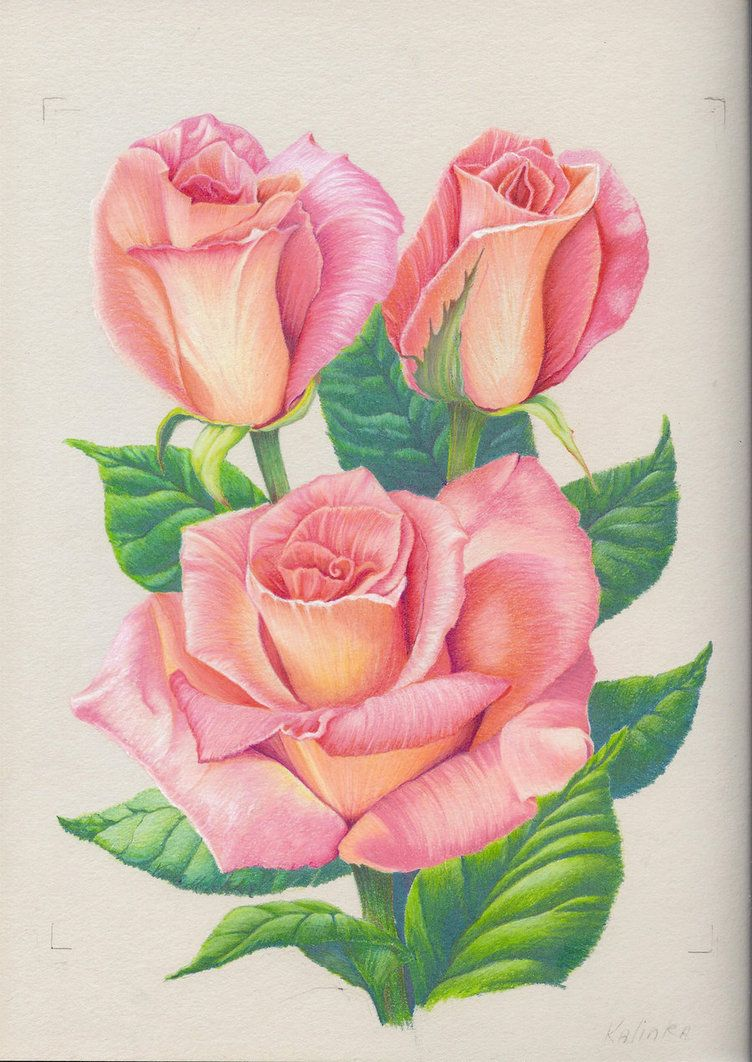 752x1062 An Old Drawing Done A Few Years Back. Do You Like Your Rose'S