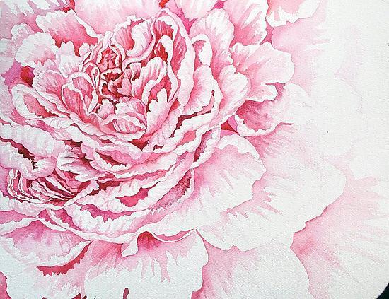550x423 Pale Pink Peony By Helen Klebesadel (Watercolor Painting) Artful