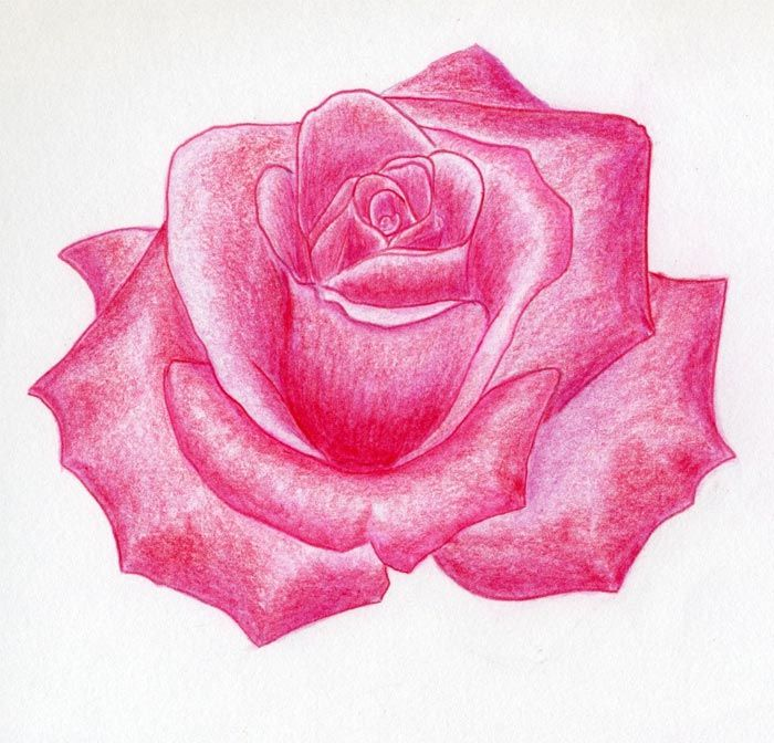 Pink rose drawing at getdrawings free for personal use pink 700x672 rose flower drawings with color to a real rose color painting mightylinksfo