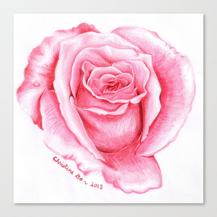 700x700 Pink Rose Drawing Canvas Print By Spoondraws Society6